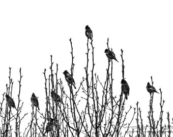 Bird Notes , Nature Photography, Home Decor, Wall Art, Texas, Gift, Black and White, Office Decor