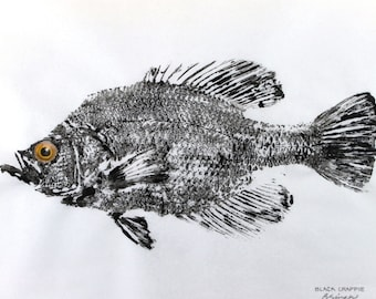 GYOTAKU fish Rubbing Crappie 8.5 X 11 quality Art Print Panfish Cottage Decor by artist Barry Singer