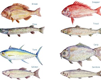 Watercolour fish clipart digital download, carp, trout, tuna, sardine, pike, sea fish