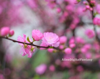 Cherry Blossom Photography, Japanese Blossoms Digital Photo, Spring Digital Photo, Japanese Style, Botanical Photo, Instant Download