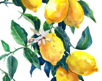 Lemon Tree art, Kitchen Artwork, Lemon Tree, original-one of a kind watercolor painting, yellow lemons, lemon art, lemon painting