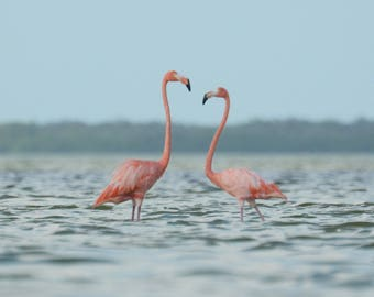 Framed Flamingo pair