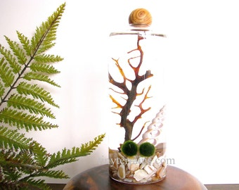Marimo Terrarium- Personalized Marimo Moss Ball Terrarium Kit, Slender Vase with Wood Ball, 23 colors, gift wrap, fast shipping