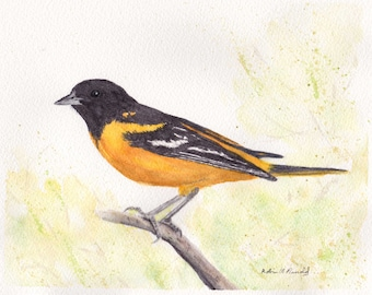Baltimore Oriole 8x10 Watercolor Painting, oriole, bird painting,Nature,Bird Lover,Wildlife,Animal,made in ohio,bird, oriole, nature