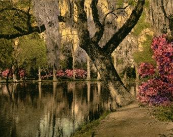 Charleston SC, Magnolia Gardens, Hand Colored, Vintage Postcard SC798992