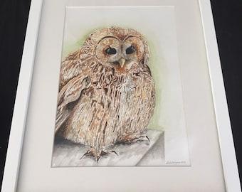 Original Watercolour ~ Tawny Owl ~ Framed