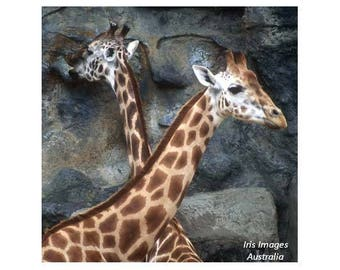 Two Giraffes GREETING CARD