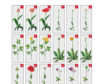 Husqvarna Viking Embroidery Design  for Designer 1 Flora  Pattern Collection # 113