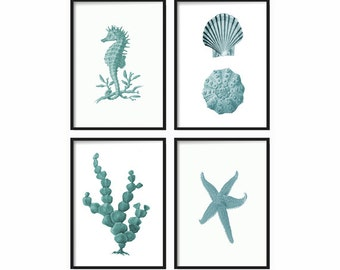 Seashell Print Set of 4 - Art Prints - Coastal Decor - Coastal Home Decor - Vintage Print - Beach Decor - Wall Art - Fine Wall Art Print