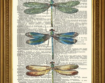 """DRAGONFLIES PRINT: Original Vintage Dictionary Book Page Antique Art Wall Hanging (8 x 10"""")"""