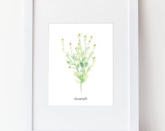 Herb Print With Label - Watercolor Chamomile Art Print - Simple Watercolor Art