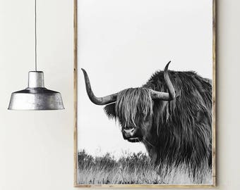 Cattle photography. Highland cow. Bull photography. Highland bull. Nature photography. Instant download