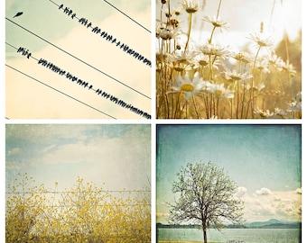 Photographie de paysage, bleu jaune Photo, photographie de Nature, grand mur Art, merles, moutarde les champs Set, marguerites, Boho été Decor
