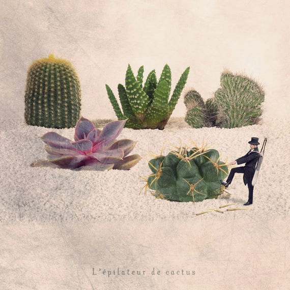 cactus print, cactus art, cactus photography, succulent print, cactus gift, cacti, Fun art, Spring decor, Nature lover, Nature decor