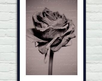Sepia print, flower fine art print, rose artwork, brown home decor, floral photograph print, bedroom bathroom girls room vertical wall art