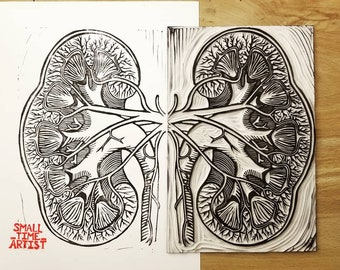 Anatomical Print #12: The Kidney