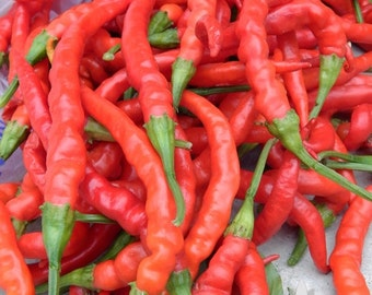 Indian Jwala Hot Pepper Heirloom Seeds - Non-GMO, Open Pollinated, Untreated