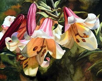 Lilium regale, GICLÉE PRINT of my original watercolor painting, watercolor flower, watercolor lilies, esperoart.