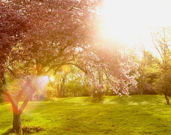 Fine art photography. Crabapple tree nature photo. Feminine chic entryway decor. Spring landscape photography. Gift for nature lovers.