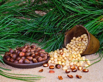 Cedar pine nut Peeled. Harvest 2017! From Sayan Mountains of Siberiya. Hand collection and processing! Premium Quality!