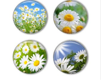 Daisy magnets or daisy pins,  flower magnets, flower pins, refrigerator magnets, fridge magnets, office magnets