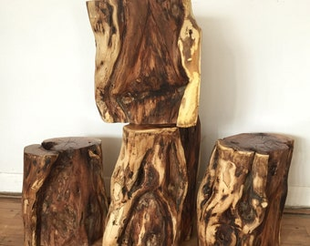 Black locust stumps