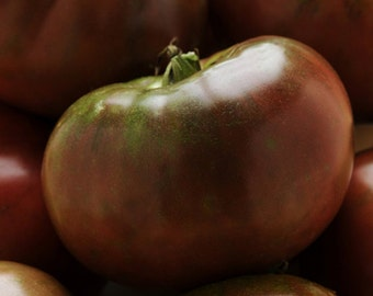 Black Krim Heirloom Tomato Seed / Garden Tomato Seed / Organic Vegetable Seed / Tomato Seed Packet of 15 / Seeds for Organic Tomatoes