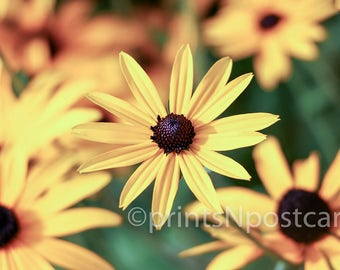 Yellow Sunflower: Fine Art Digital Printable Photography - Photo Print/Wallpaper/Backdrop