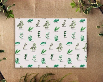 Painted Herb Cards : Boxed Set of 10 Blank Everyday Stationery Cards