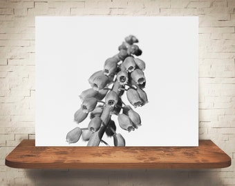 Grape Hyacinth Flower Photograph - Fine Art Print - Black White Photo - Wall Art - Floral Decor - Wall Decor - Pictures of Flowers - Blue