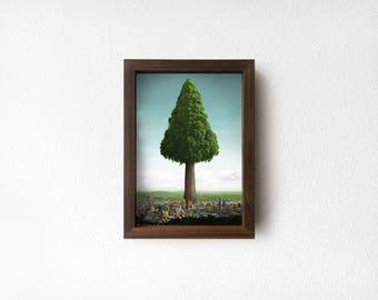 Small Big Ole Tree, Walnut Moriki Frame