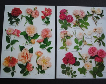 10 Vintage Roses Pages Paper Pack Scraps for Scrapbooking, Collage, Decoupage, Junk Journalling