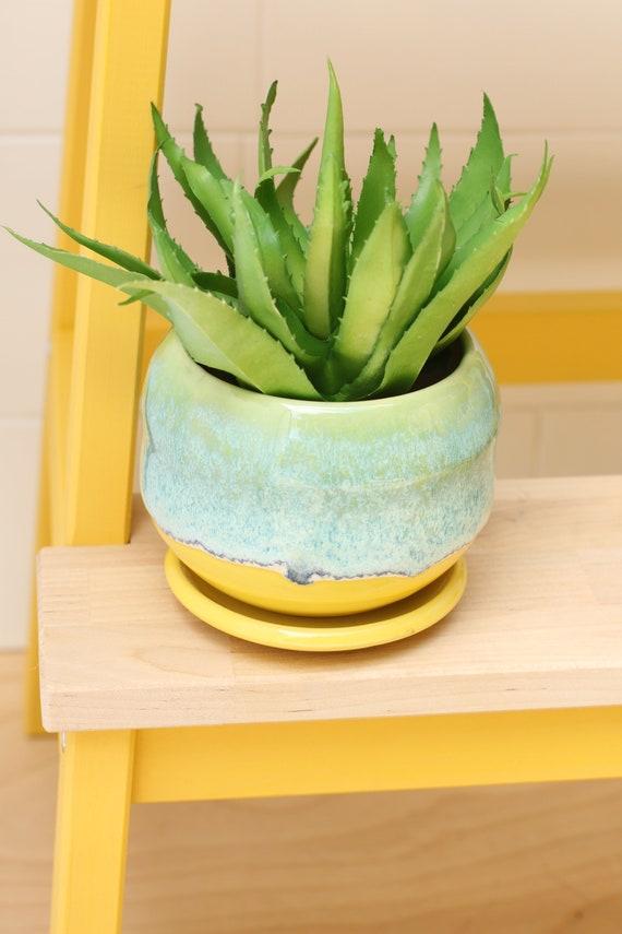 coastal succulent planter // cactus planter // succulent pot // ceramic pot // flower pot