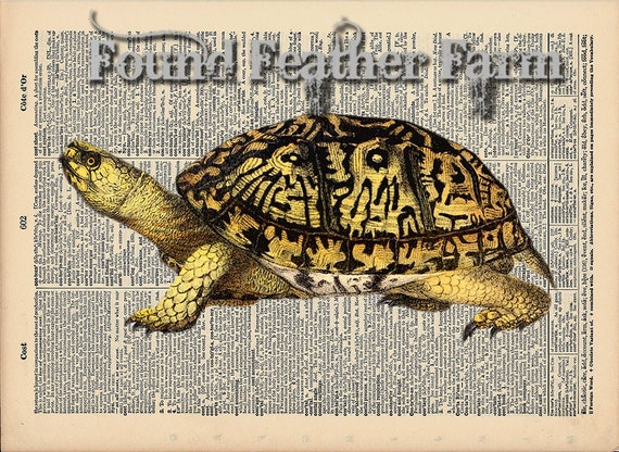 """Vintage Antique Dictionary Page with Antique Print """"Turtle One"""""""
