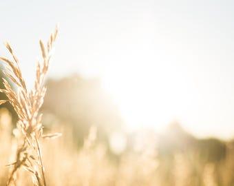 Golden Field Summery Sunshine - INSTANT DOWNLOAD Stock photo | wheat