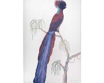 Bird of Paradise, Epimachus, Tea Towel. Unbleached cotton.