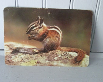 1950s Giant Postcard of a Chipmonk