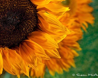 Sunflower Photo Art, Flower Photo, Nature Photography, Still Life Photography, Yellow, Orange, Green, Brown, Photo Wall Art, Home Decor