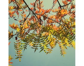 Autumn Leaves,  Red and Gold Wall Art, Rustic Country Decor, Sumac Tree Photography, Fine Art Print