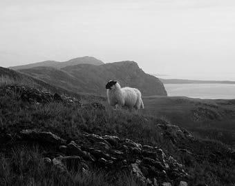 Landscape of Ireland / Irish Landscape Photography (sheep)