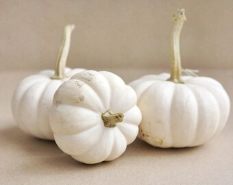 White pumpkins photo print, rustic kitchen wall art, neutral food art, farmhouse chic wall decor, country house decor, farm large wall art