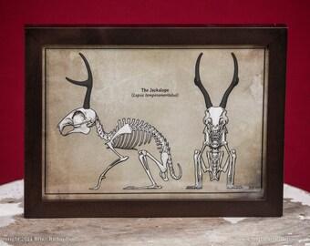 Jackalope Skeleton Faux-Scientific Print