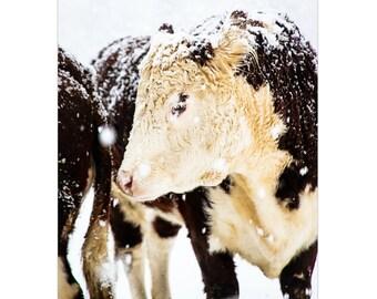 Cow Print, Cow Art, Farmhouse Decor, French Country Decor, Winter Art, Large Wall Art, Rustic Decor, Winter Snow Photo, Fine Art Print