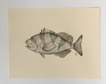 Original Red Banded Rockfish sketch
