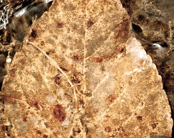 Underwater Autumn Bright Brown Leaf - Photography --  8x12