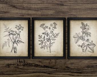 Antique Botanical Print Set of 3 - Plant Botanical Art Decor - Digital Art - Printable Art - Set Of Three Prints #187 - INSTANT DOWNLOAD