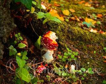 Toadstall digital download photography