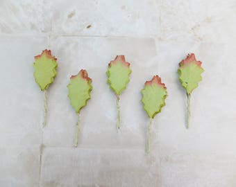 50 fall green mulberry paper holly leaves