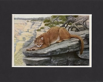 Mountain Lion Print 1916 by Louis Agassiz Fuertes Vintage Mounted Bookplate Picture with Mat Mountain Lion Picture Cougar Print Puma Print