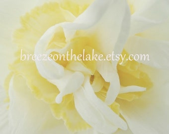 Printable flower photo, wall art, flower photography, instant download, delicate floral